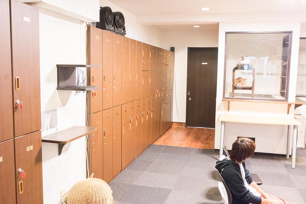 猫カフェ・きゃりこの部屋の風景