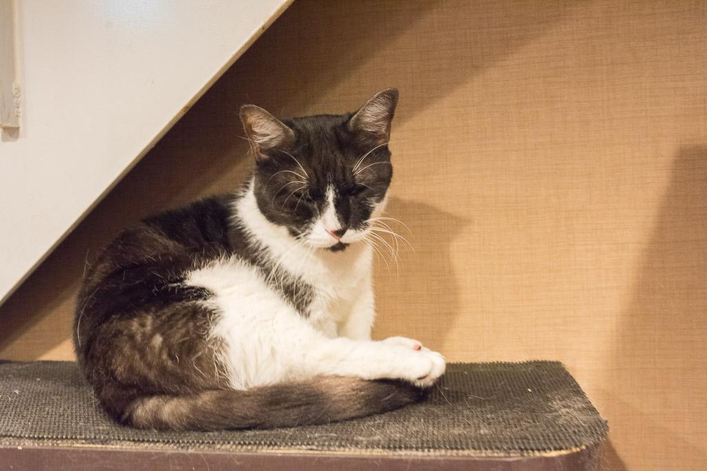 猫カフェ・きゃりこの階段で寝てる猫2