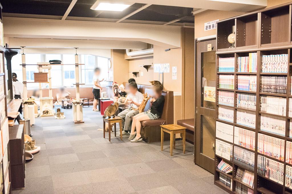 猫カフェ・きゃりこの猫・漫画スペース