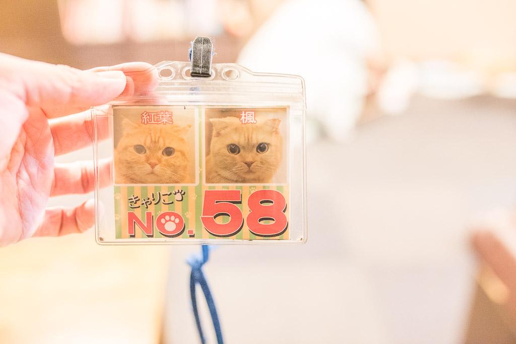 猫カフェ・きゃりこの名前プレート