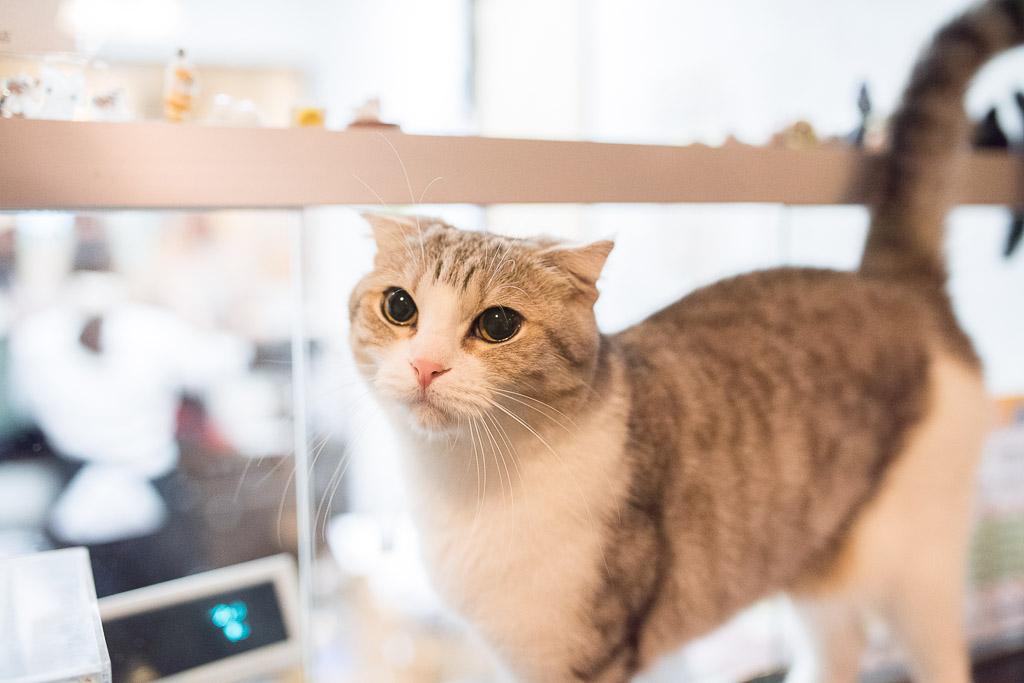 猫カフェ・きゃりこのレジにいた猫