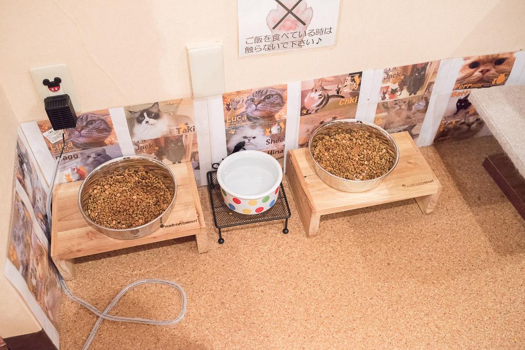 猫カフェ・ジャララの猫の餌場