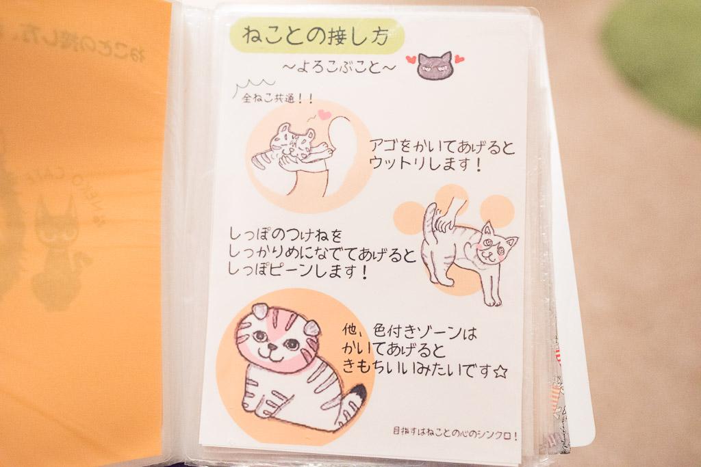 猫との接し方マニュアル