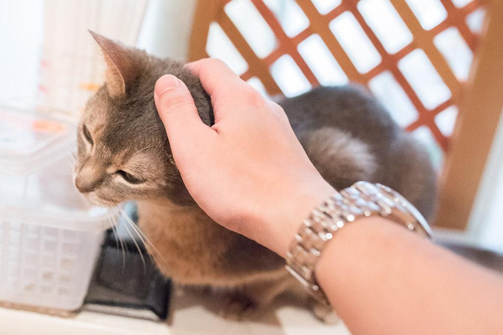 猫カフェ・ジャララで猫の頭を撫でる