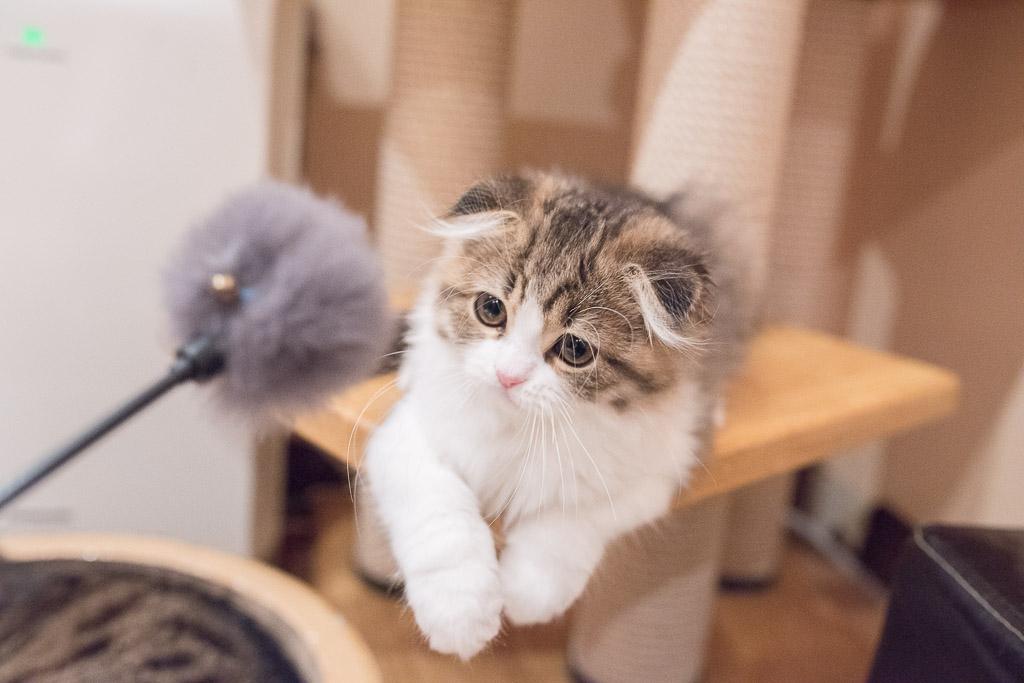 猫カフェ・ジャララで猫と遊ぶところ