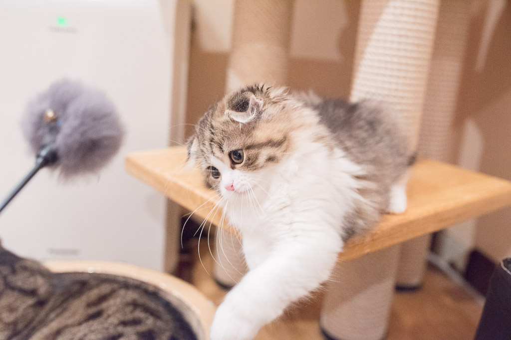 猫が猫パンチを外したところ