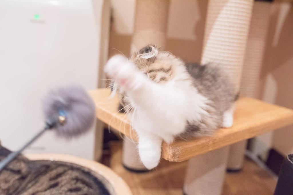 躍動感ある猫パンチの様子