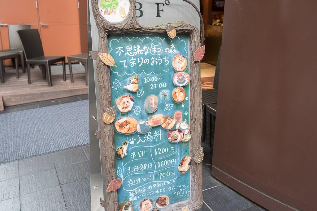 猫カフェ・てまりのおうちの看板
