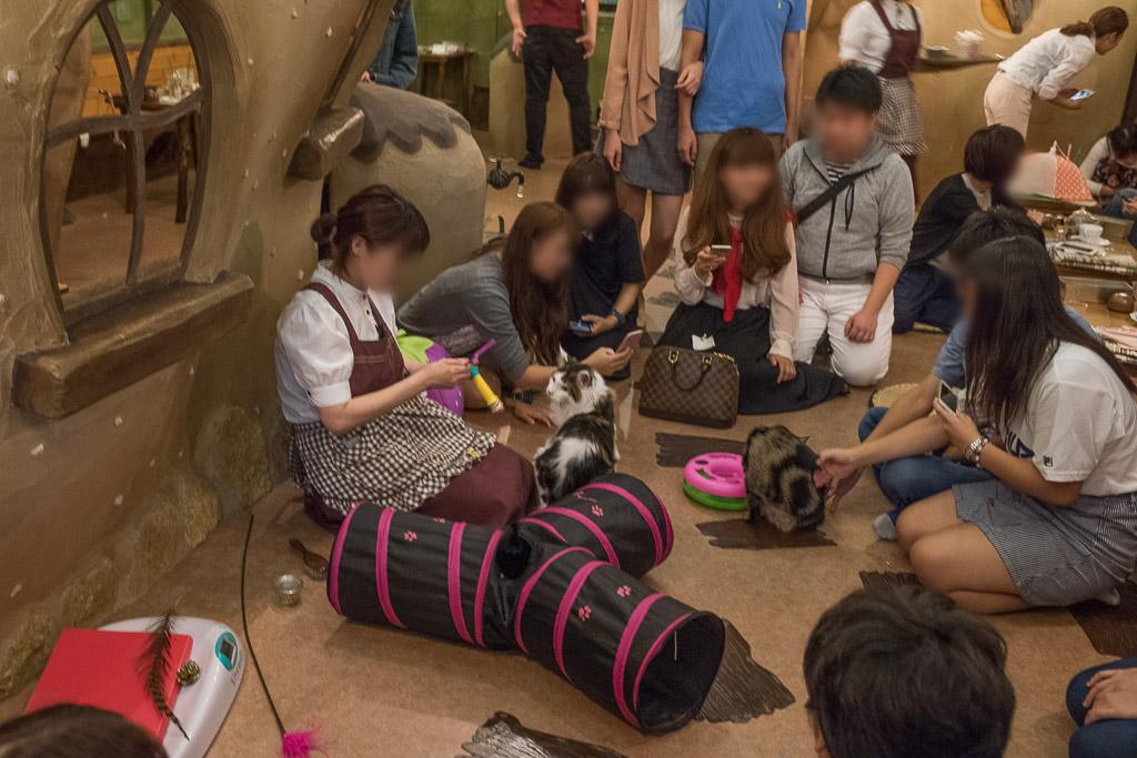 猫カフェ・てまりのおうちでスタッフに猫が集まってる