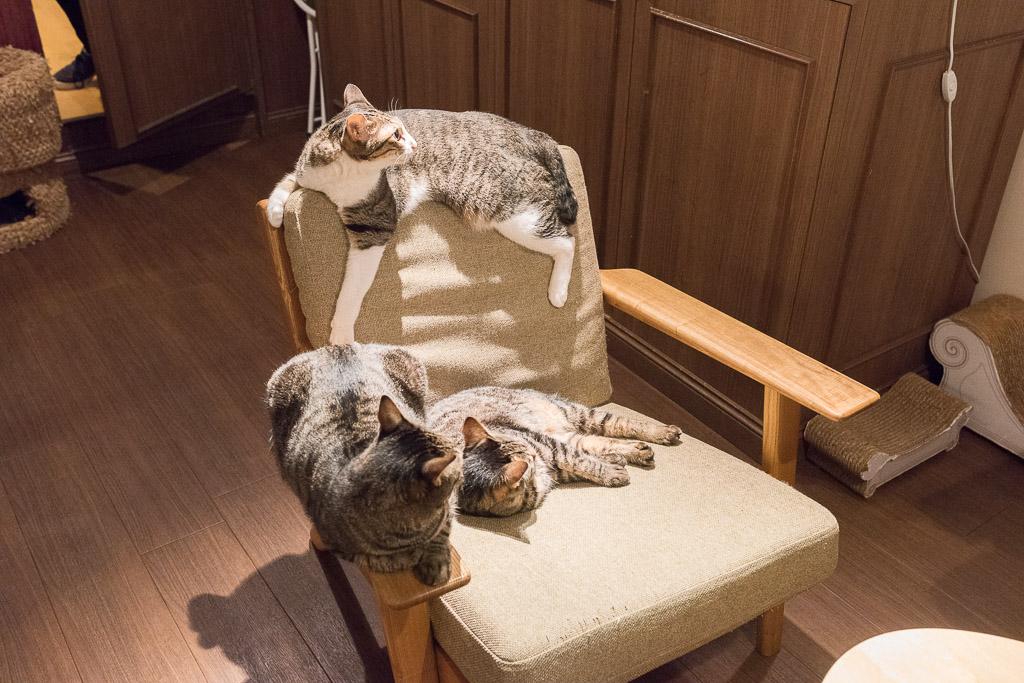 猫カフェ・きゃらふの猫に占領された椅子
