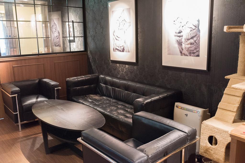 猫カフェ・きゃらふのソファ席
