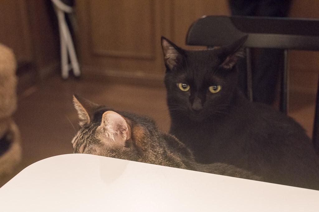 猫カフェ・きゃらふの黒猫