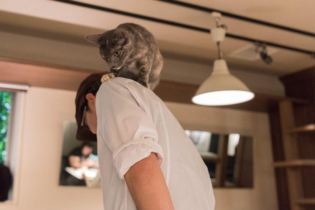 店員さんの肩の上に乗る猫