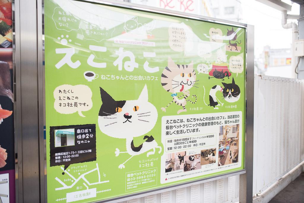 猫カフェ・えこねこの看板