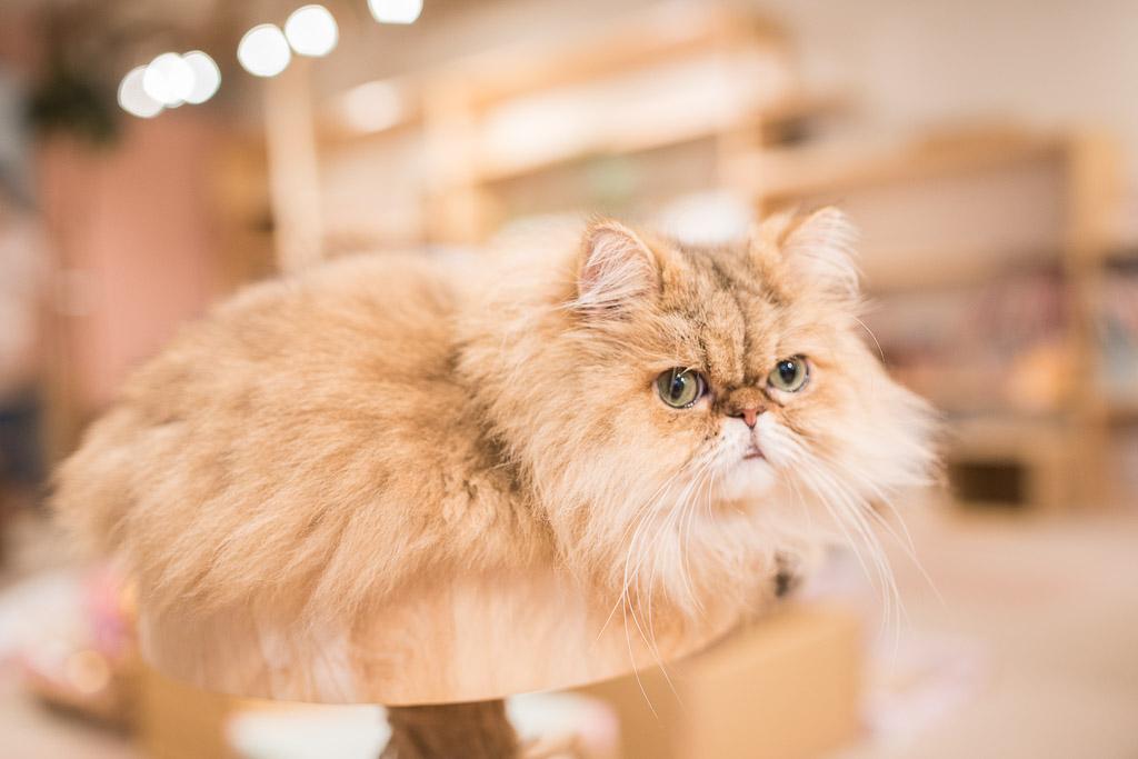 猫カフェ・キャテリアムの猫