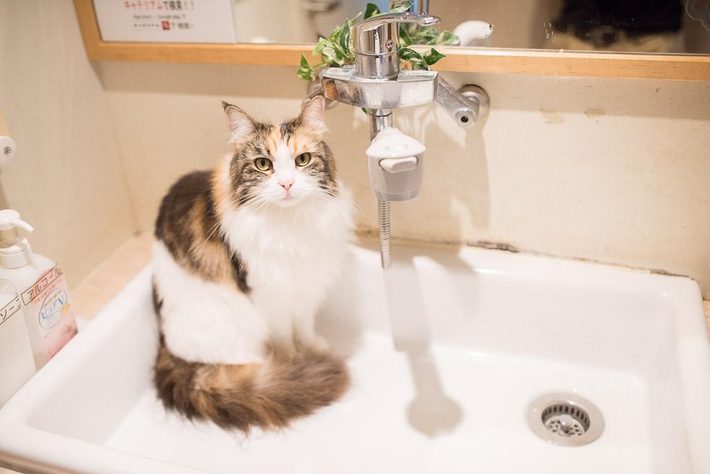 猫カフェ・キャテリアムの洗面台と居座る猫
