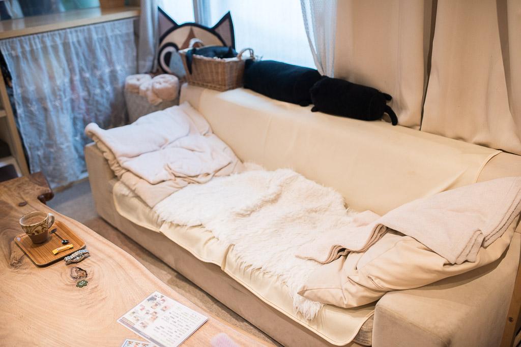 猫カフェ・キャテリアムのソファ席