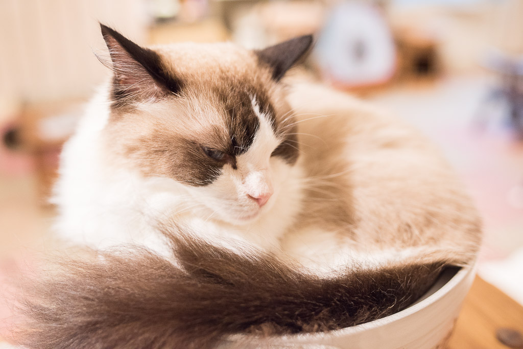 猫のドリー君のイケメンな表情
