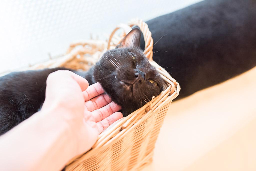猫のグリ君を撫でる