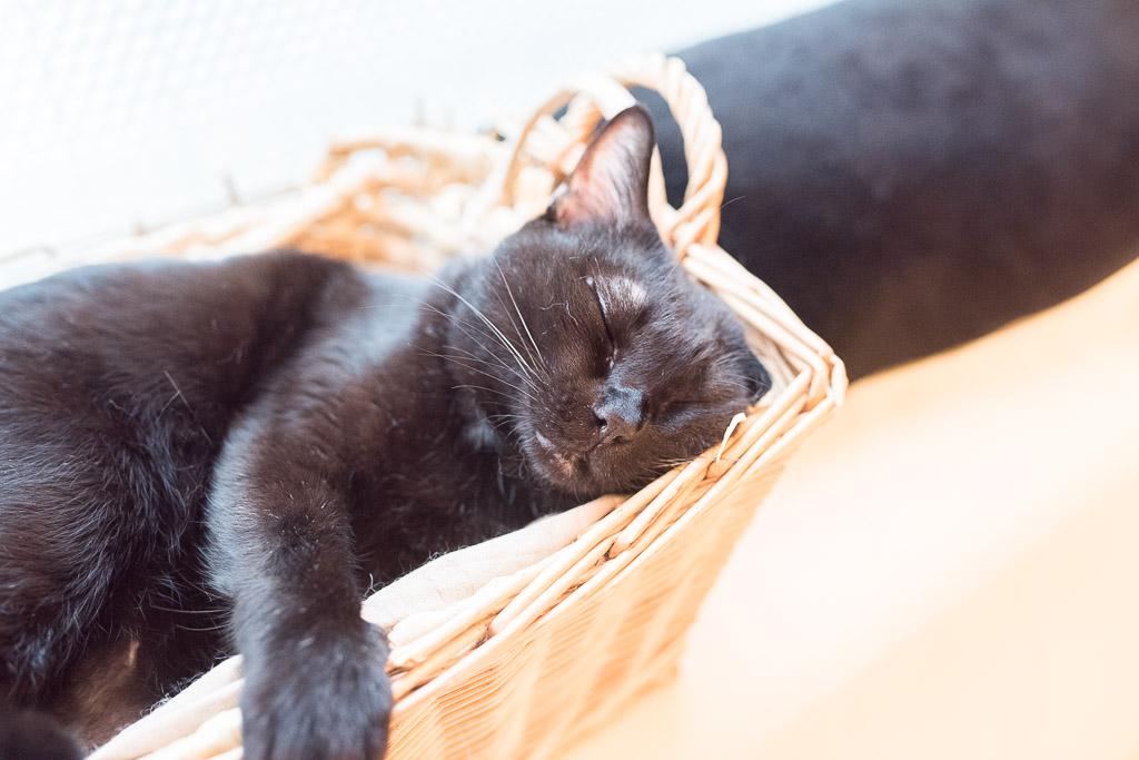 猫のグリ君を撫でてたら寝てしまった