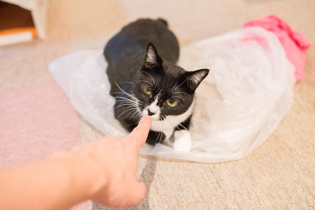 猫カフェ・キャテリアムにいた子ネコ