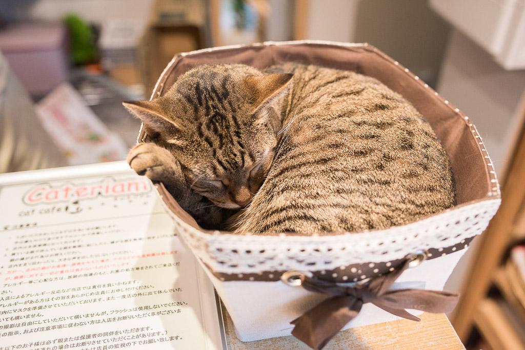 猫カフェ・キャテリアムのお会計場所で寝てる猫