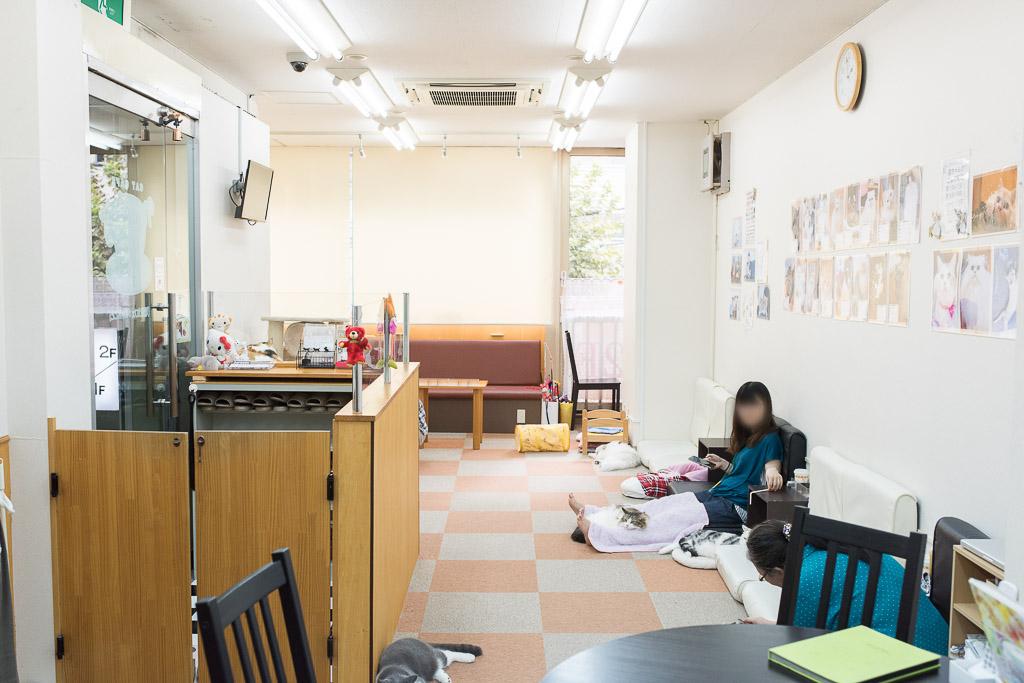 猫カフェ・にゃんことの店内
