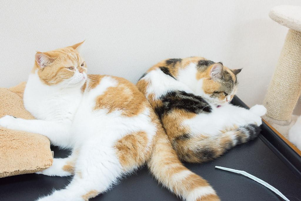猫カフェ・にゃんことの猫たち