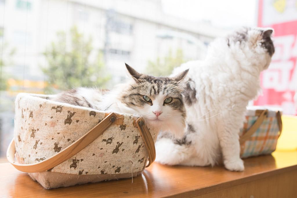 猫カフェ・にゃんことのきれいな猫たち