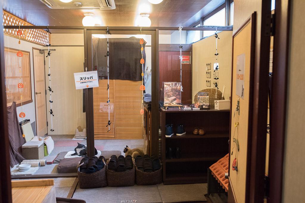 猫カフェ・猫の居る休憩所299の入り口