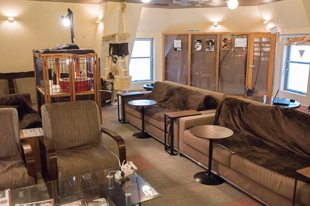 猫カフェ・猫の居る休憩所299のソファ席とチェア席