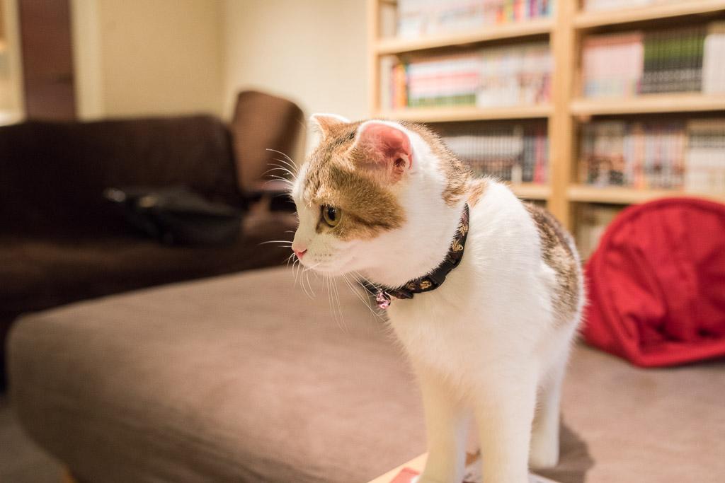 猫カフェ・猫の居る休憩所299にいる猫はあまり触られたくない