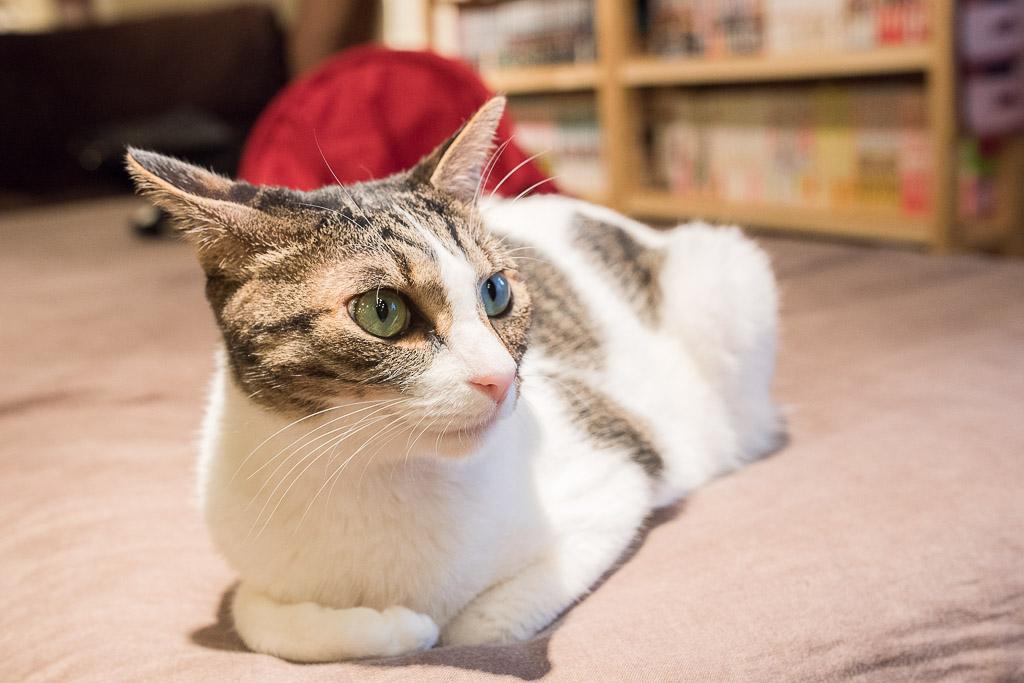 まったく動かない猫