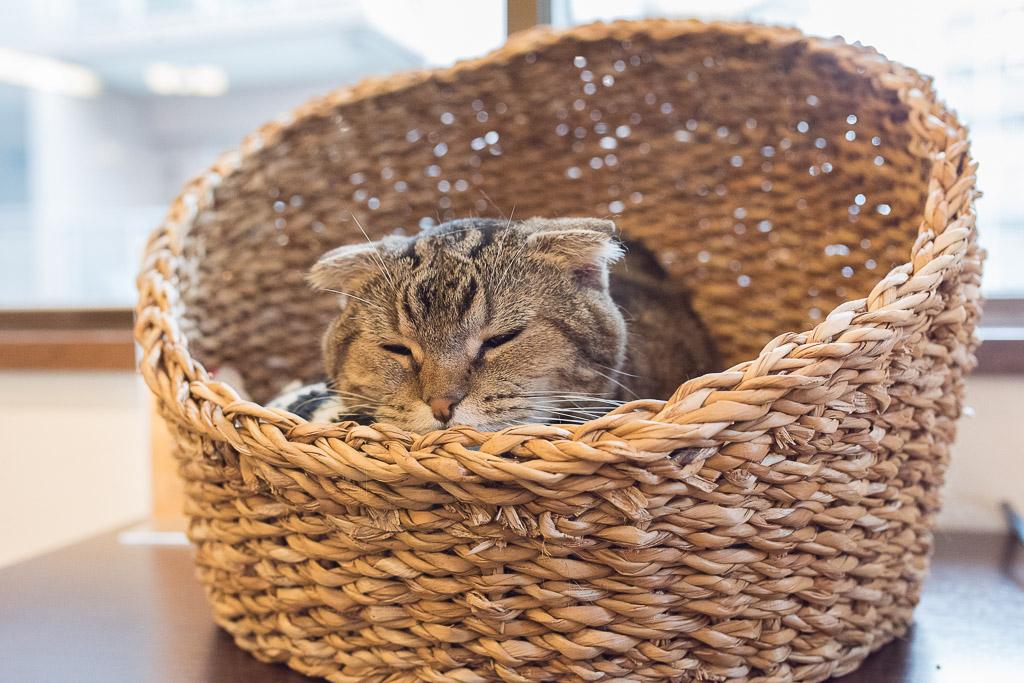 ひたすら寝てる猫