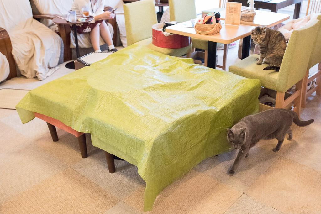 猫カフェ・ねこのみせのおやつあげる用シート