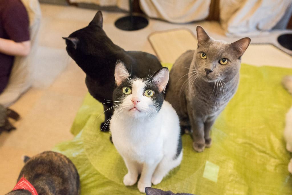 猫カフェ・ねこのみせの猫たち