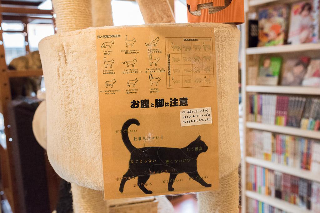 猫の撫で方の表