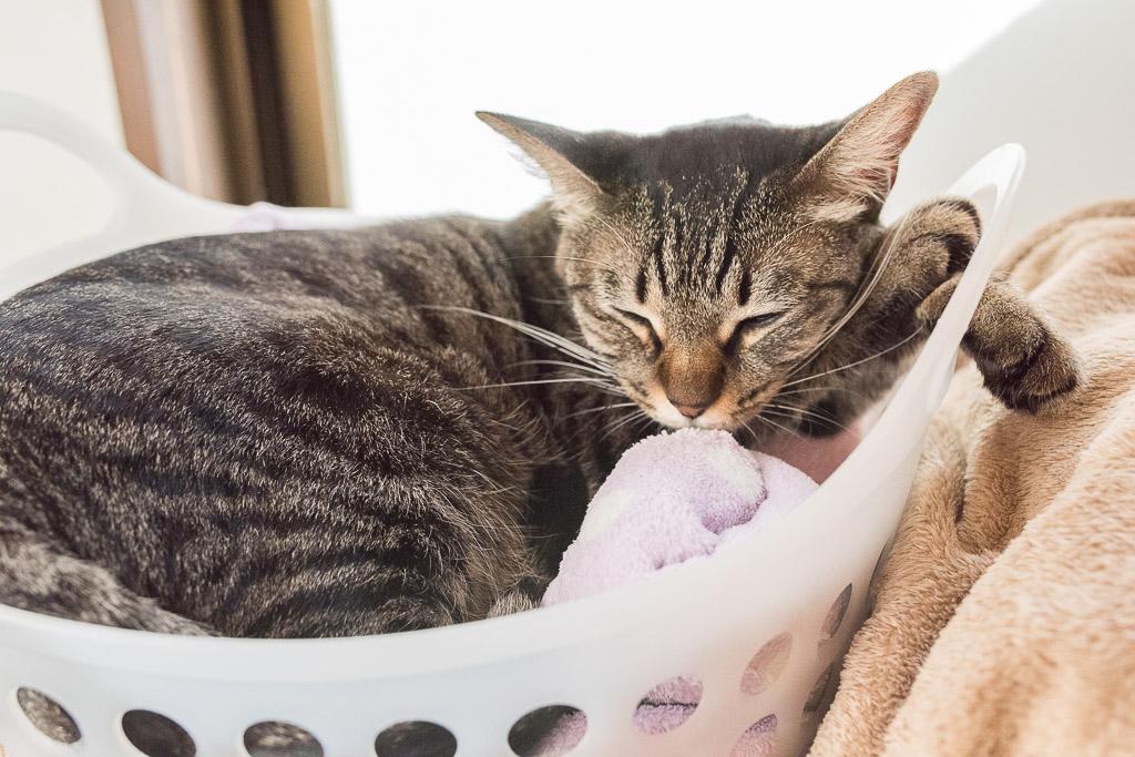 やたらと寝てる猫