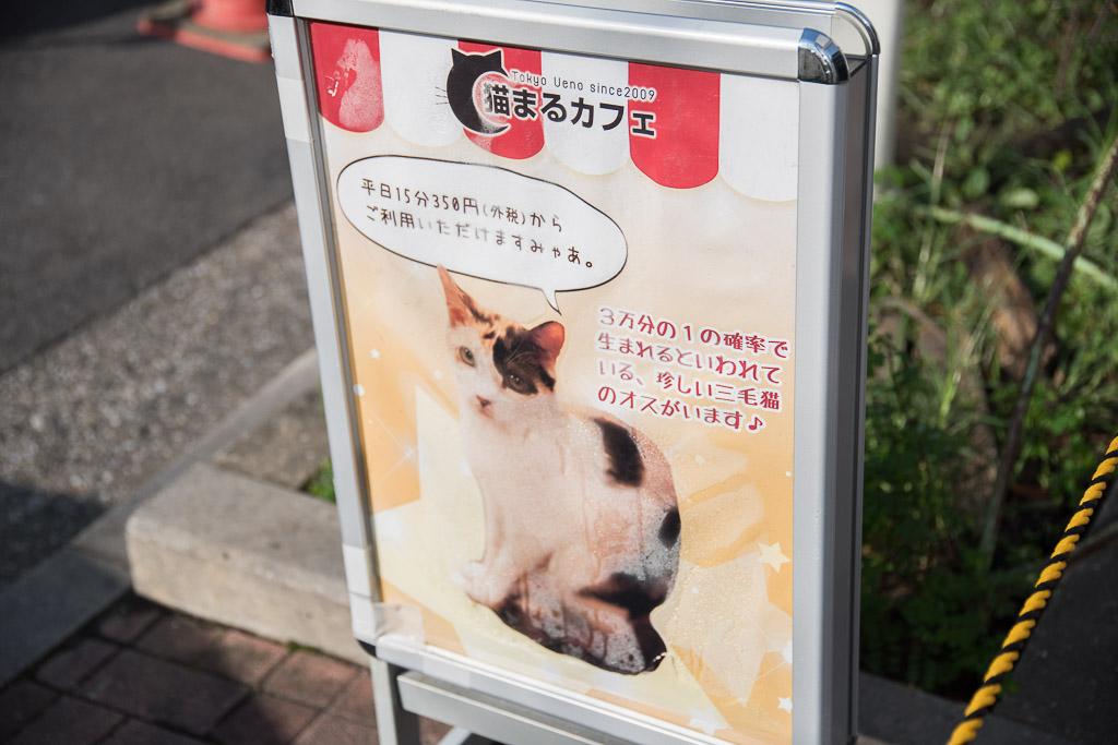 猫まるカフェの看板