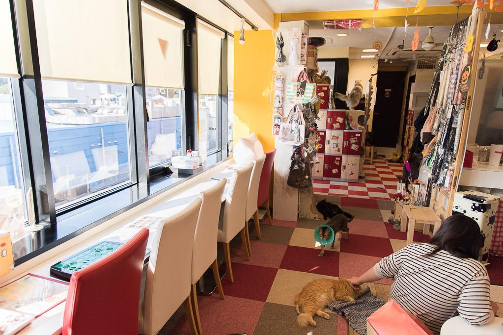 猫まるカフェのカウンター席