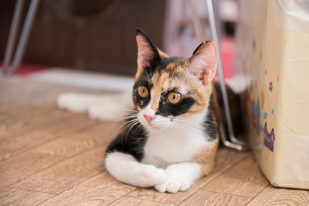 面白い模様の猫