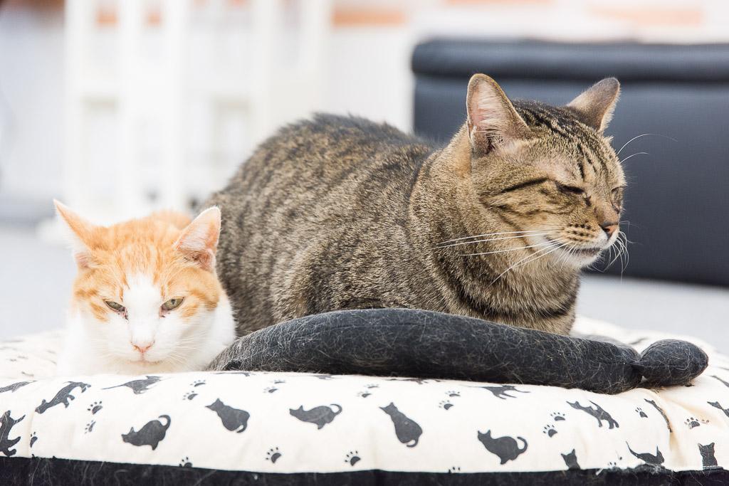猫カフェ・まちねこの猫たちは寝るときも一緒