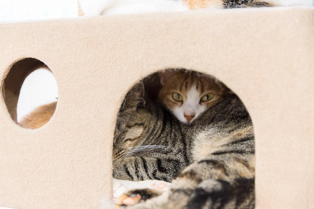 狭いところに3匹でかたまってる猫たち