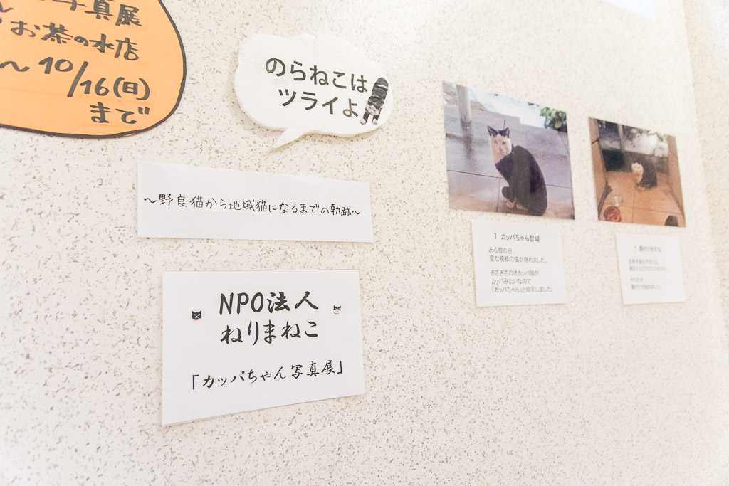 猫カフェ・ネコリパブリックの階段にある張り紙