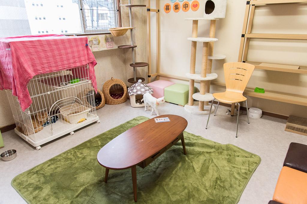 猫カフェ・ネコリパブリックの貸し切りできる部屋