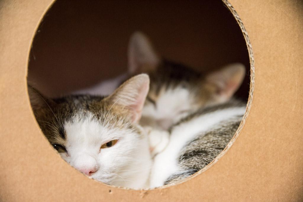猫カフェ・ネコリパブリックの眠たそうな猫たち