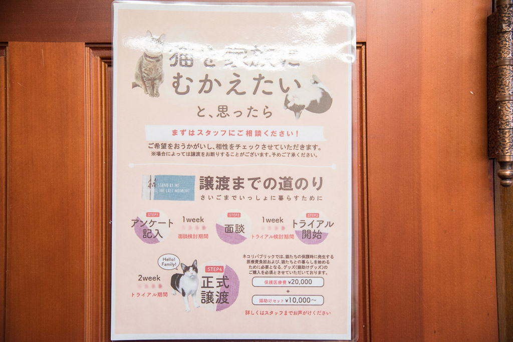 猫カフェ・ネコリパブリックで猫を迎えたい人へ