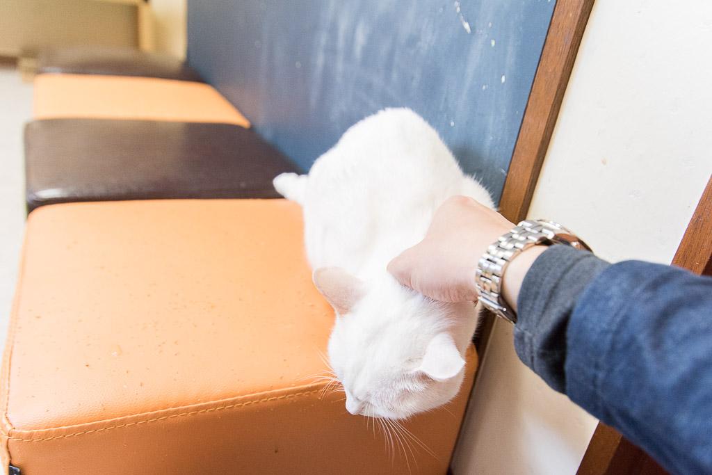 猫カフェ・ネコリパブリックにいる撫でられたい猫