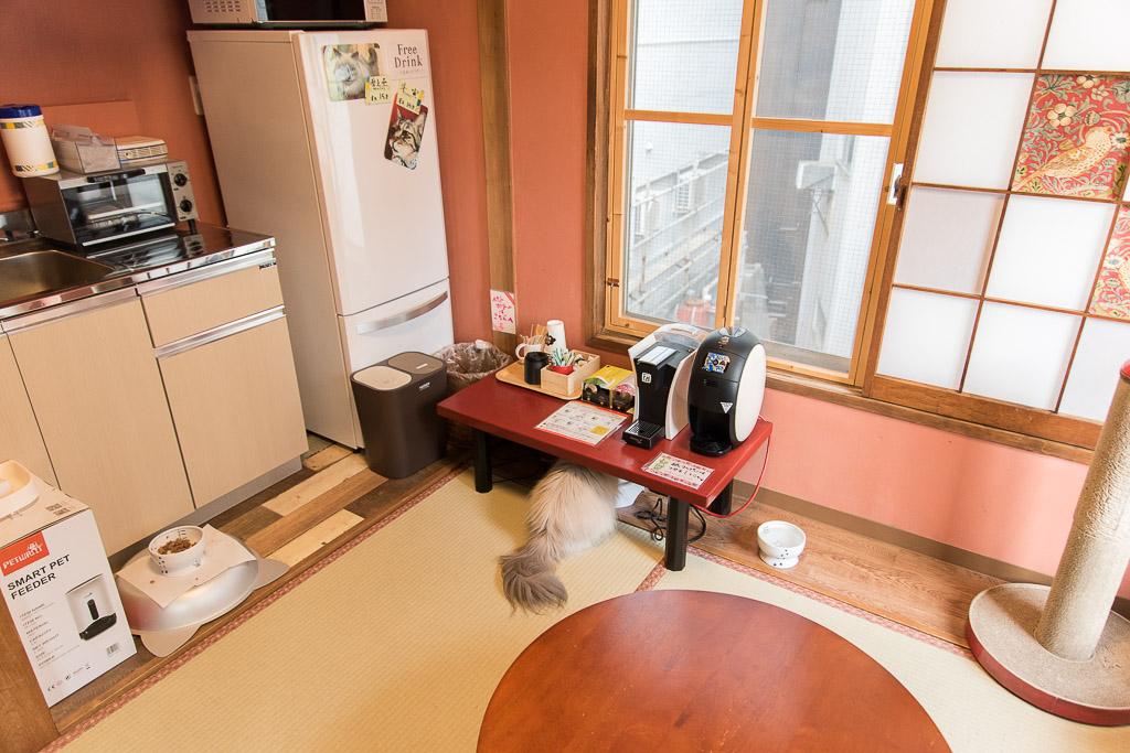 猫カフェ・ネコリパブリックのドリンクエリア
