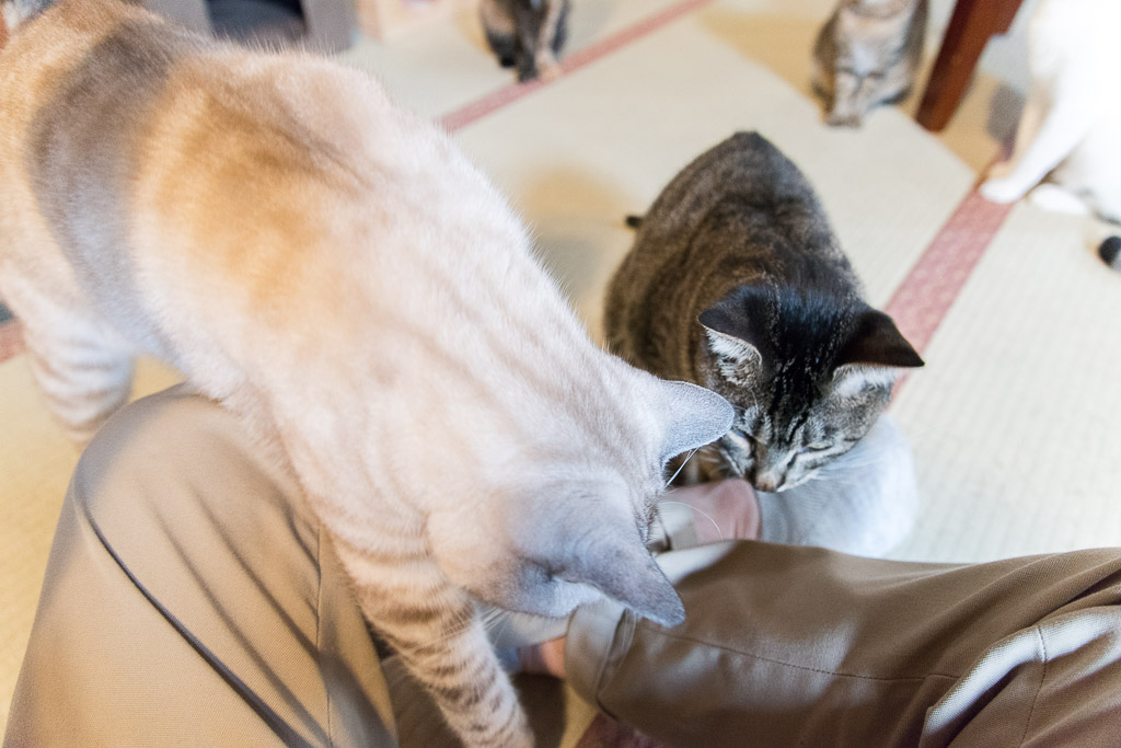 おやつ欲しさに足の上に乗ってくる猫たち